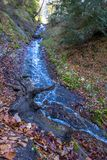 Ένα ρεύμα βουνών με το σαφές νερό ρέει κάτω από έναν λόφο σε μια δασώδη περιοχή Στοκ εικόνες με δικαίωμα ελεύθερης χρήσης