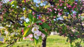 Ένα ρόδινο λουλούδι μεταξύ των ανθίσεων στοκ εικόνες με δικαίωμα ελεύθερης χρήσης