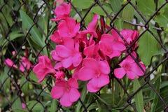 Ένα ρόδινο λουλούδι Στοκ φωτογραφίες με δικαίωμα ελεύθερης χρήσης