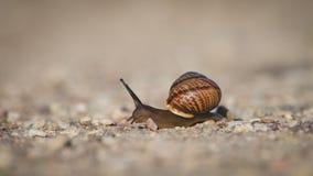 Ένα σαλιγκάρι που σέρνεται στο δρόμο Στοκ Φωτογραφίες