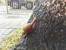 Ένα σαλιγκάρι σε ένα δέντρο στοκ φωτογραφίες