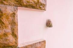 Ένα σαλιγκάρι στο ρόδινο τοίχο στοκ φωτογραφία με δικαίωμα ελεύθερης χρήσης