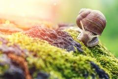 Ένα σαλιγκάρι στο φυσικό περιβάλλον Μακροεντολή κλείστε επάνω την εικόνα φύσης στοκ εικόνες με δικαίωμα ελεύθερης χρήσης