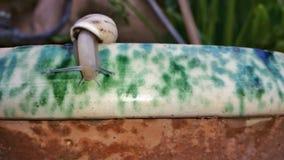 Ένα σαλιγκάρι σε ένα βάζο Στοκ φωτογραφία με δικαίωμα ελεύθερης χρήσης