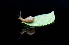 Ένα σαλιγκάρι στοκ εικόνες με δικαίωμα ελεύθερης χρήσης