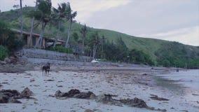Ένα σκυλί από την ακτή απόθεμα βίντεο