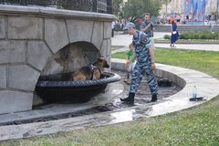 Ένα σκυλί αστυνομίας λούζει σε μια πηγή πόλεων κατά τη διάρκεια της θερμότητας στοκ εικόνες με δικαίωμα ελεύθερης χρήσης