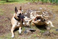 Ένα σκυλί και ένας κροκόδειλος Στοκ εικόνα με δικαίωμα ελεύθερης χρήσης