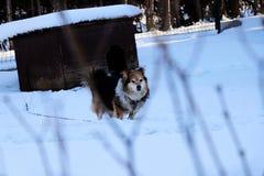 Ένα σκυλί μεταξύ μερικών κλαδίσκων που κοιτάζουν σε με στοκ εικόνες