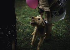 Ένα σκυλί με ένα ρόδινο μπαλόνι Στοκ Φωτογραφίες
