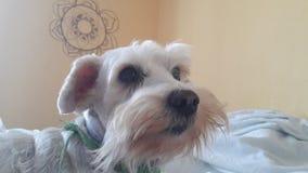 Ένα σκυλί ομορφιάς Στοκ φωτογραφία με δικαίωμα ελεύθερης χρήσης