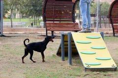 Ένα σκυλί παίζει στις εγκαταστάσεις στο πάρκο σκυλιών στοκ φωτογραφίες με δικαίωμα ελεύθερης χρήσης