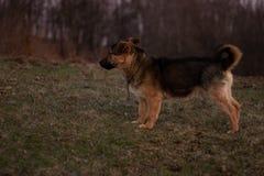 Ένα σκυλί που δίνει την προσοχή στοκ φωτογραφία με δικαίωμα ελεύθερης χρήσης