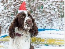 Ένα σκυλί σε μια κόκκινη ΚΑΠ στο κεφάλι του κάθεται σε έναν πάγκο σε έναν χιονώδη στοκ φωτογραφία