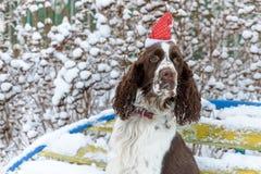 Ένα σκυλί σε μια κόκκινη ΚΑΠ στο κεφάλι του κάθεται σε έναν πάγκο σε έναν χιονώδη στοκ φωτογραφία με δικαίωμα ελεύθερης χρήσης