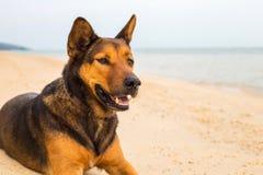 Ένα σκυλί στην παραλία στοκ εικόνες με δικαίωμα ελεύθερης χρήσης