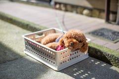 Ένα σκυλί στηρίζεται στη θερινή ημέρα στοκ φωτογραφία