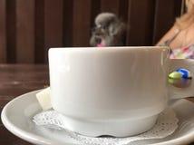 Ένα σκυλί Στοκ φωτογραφία με δικαίωμα ελεύθερης χρήσης