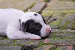Ένα σκυλί 001 κουταβιών Στοκ Φωτογραφίες
