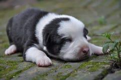 Ένα σκυλί 003 κουταβιών Στοκ φωτογραφίες με δικαίωμα ελεύθερης χρήσης