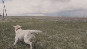 Ένα σκυλί με ένα Frisbee απόθεμα βίντεο