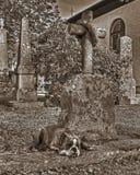 Ένα σκυλί με μια σπασμένη πίστη καρδιά στο αναδρομικό ύφος Στοκ Εικόνες