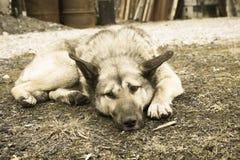 Ένα σκυλί οδών Στοκ φωτογραφία με δικαίωμα ελεύθερης χρήσης