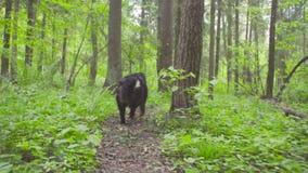 Ένα σκυλί σε ένα δάσος στη θερινή ημέρα απόθεμα βίντεο