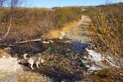 Ένα σκυλί σε ένα ρεύμα Στοκ εικόνες με δικαίωμα ελεύθερης χρήσης