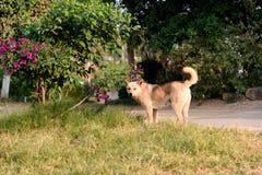Ένα σκυλί σε Jianshui Στοκ Εικόνες