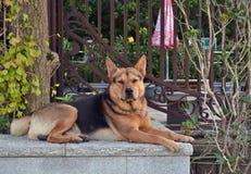 Ένα σκυλί σε Tian Tan Βούδας, Χονγκ Κονγκ Στοκ Φωτογραφίες