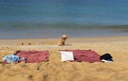 Ένα σκυλί στην παραλία Στοκ φωτογραφίες με δικαίωμα ελεύθερης χρήσης