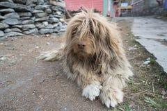 Ένα σκυλί στο χωριό του Νεπάλ, τοπίο στο κύκλωμα Annapurna, να πραγματοποιήσει οδοιπορικό Στοκ Εικόνα