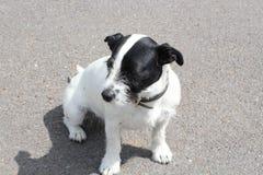 Ένα σκυλί Στοκ εικόνες με δικαίωμα ελεύθερης χρήσης