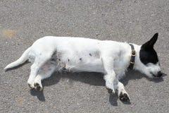 Ένα σκυλί Στοκ Εικόνες