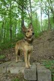 Ένα σκυλί Στοκ Φωτογραφία
