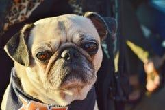 Ένα σκυλί στοκ εικόνα με δικαίωμα ελεύθερης χρήσης