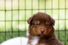 Ένα συμπαθητικό σκυλάκι που φαίνεται κάμερα Στοκ Φωτογραφία