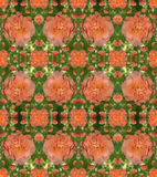 Ένα σχέδιο των τριαντάφυλλων με τη δροσιά μειώνεται Στοκ φωτογραφία με δικαίωμα ελεύθερης χρήσης
