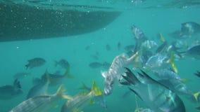 Ένα σχολείο των ψαριών που κολυμπούν κάτω από μια βάρκα απόθεμα βίντεο