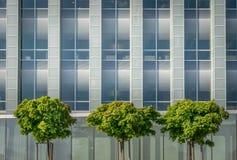 Ένα σύγχρονο κτήριο γυαλιού με τρία δέντρα στοκ φωτογραφία με δικαίωμα ελεύθερης χρήσης