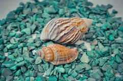 Ένα σύνολο διάφορων διαφορετικών κοχυλιών πράσινες πέτρες Στοκ φωτογραφία με δικαίωμα ελεύθερης χρήσης