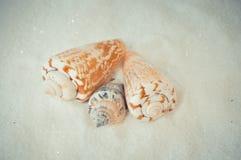 Ένα σύνολο διάφορων διαφορετικών κοχυλιών σε μια άσπρη άμμο Στοκ φωτογραφία με δικαίωμα ελεύθερης χρήσης