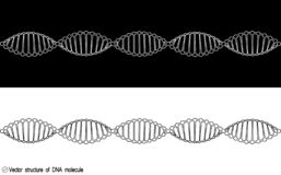 Ένα σύνολο δύο παραλλαγών του μορίου DNA, περίληψη Γραπτή ποικιλία Απλό σχέδιο, εικονίδιο ελεύθερη απεικόνιση δικαιώματος