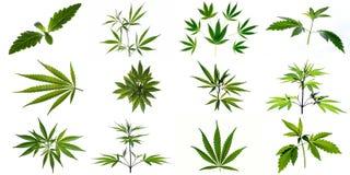 Ένα σύνολο εικόνων των φυτών και των φύλλων της μαριχουάνα στοκ εικόνες