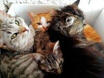 Ένα σύνολο κιβωτίων των γατών στοκ φωτογραφίες με δικαίωμα ελεύθερης χρήσης