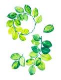 Ένα σύνολο κλάδων με τα πράσινα φύλλα, τα πράσινα φύλλα και ένα στεφάνι των φύλλων ευκαλύπτων Απεικόνιση Watercolor που απομονώνε απεικόνιση αποθεμάτων