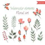 Ένα σύνολο μούρων, λουλουδιών και φύλλου watercolor Διανυσματική συλλογή με τα φύλλα και τα λουλούδια, σχέδιο χεριών Στοκ εικόνα με δικαίωμα ελεύθερης χρήσης