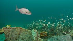 Ένα σύνολο των ειδών που εκπαιδεύουν επάνω από μια κοραλλιογενή ύφαλο στοκ φωτογραφία με δικαίωμα ελεύθερης χρήσης