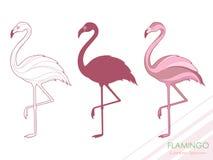 Ένα σύνολο φλαμίγκο Σκιαγραφία των φλαμίγκο Ένα τροπικό πουλί διάνυσμα ΛΟΓΟΤΥΠΟ Στοκ Εικόνα